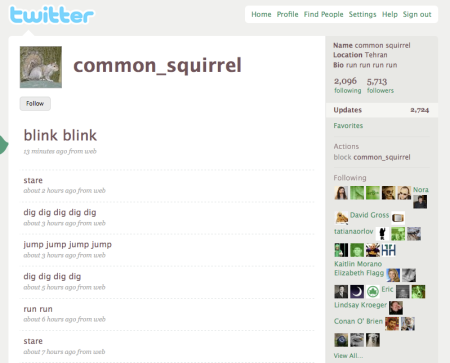 Twitter Common Squirrel